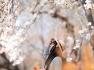 경북 경주 인물샷 2부/하얀 꽃구름 앉은 경주 오릉(五陵)목련 【20년3월25일】