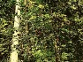 다산초당(하) - ' 다산초당도'와 다산초당, 틀린 그림 찾기