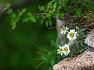 설악산 공룡능선의 초여름 야생화