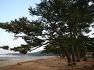 우리 민족이 가장 좋아하는 나무, 소나무! 신품종 '소나무 & 곰솔' 알아보기