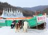겨울 축제, 청양 알프스마을 칠갑산 얼음분수축제