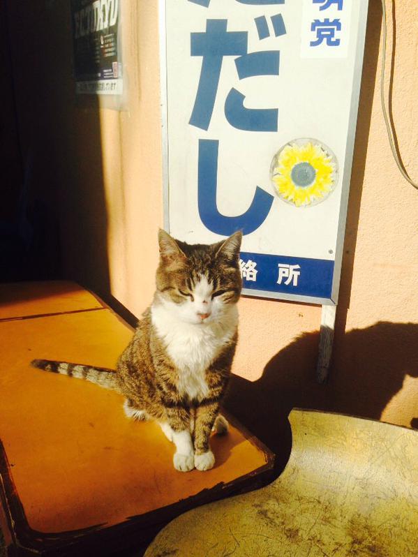 도쿄 고양이