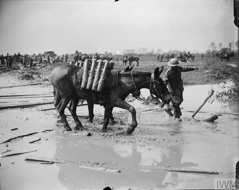 제 1차 세계대전중 파스샹달 전투 당시 영국군 포탄 수송 노새  British Army Mule convoy carrying ammunition during the Battle of Passchendaele
